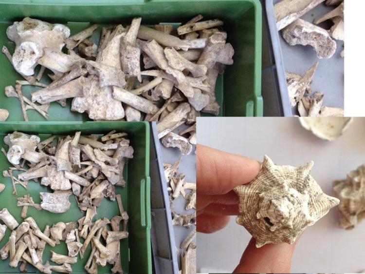 bones3 copy